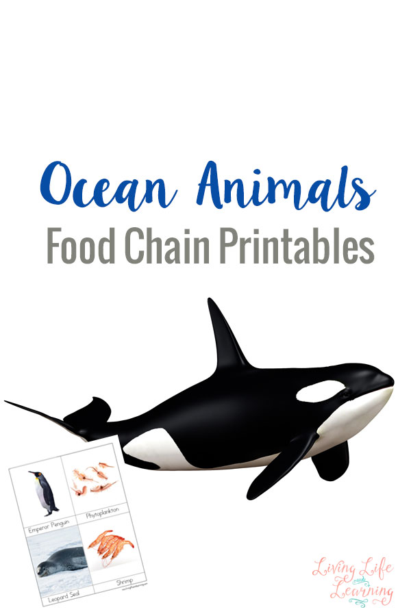 Ocean Animals Food Chain Printables