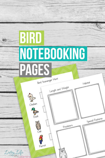 Bird Notebooking Pages