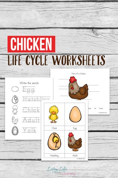 Chicken Life Cycle Worksheets