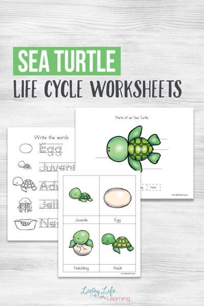 Sea Turtle Life Worksheets