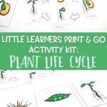 Little Learners Print & Go Activity Kit: Plant Life Cycle