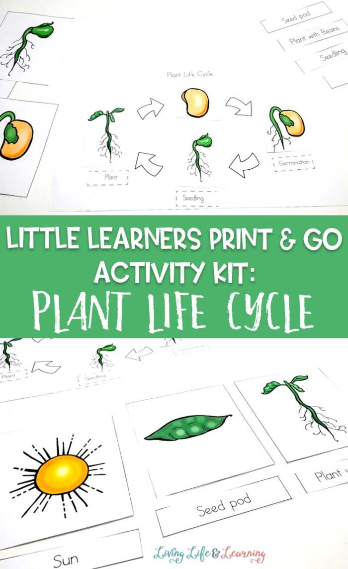 Little Learners print and go activity kit plant life cycle