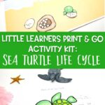 Little Learners Print & Go Activity Kit: Sea Turtle Life Cycle