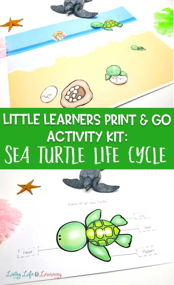 Little Learners print and go activity kit sea turtle life cycle