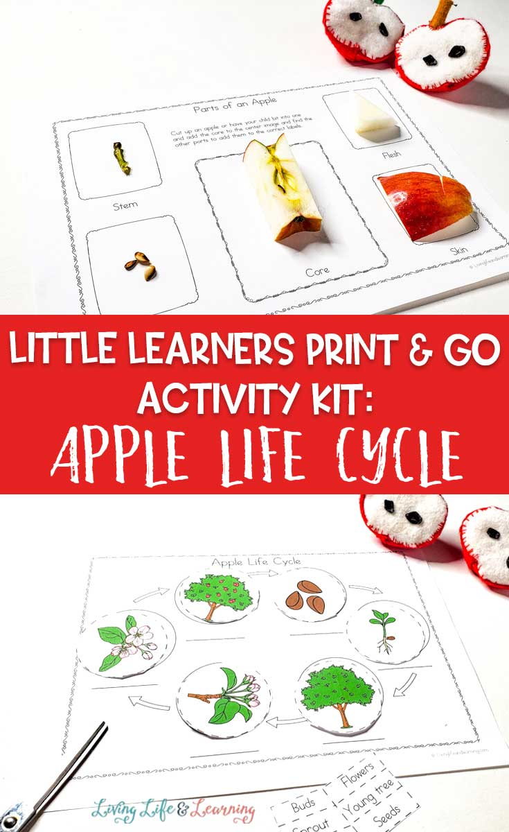 Little Learners print and go activity kit apple life cycle