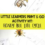 Little Learners Print & Go Activity Kit: Honey Bee Life Cycle