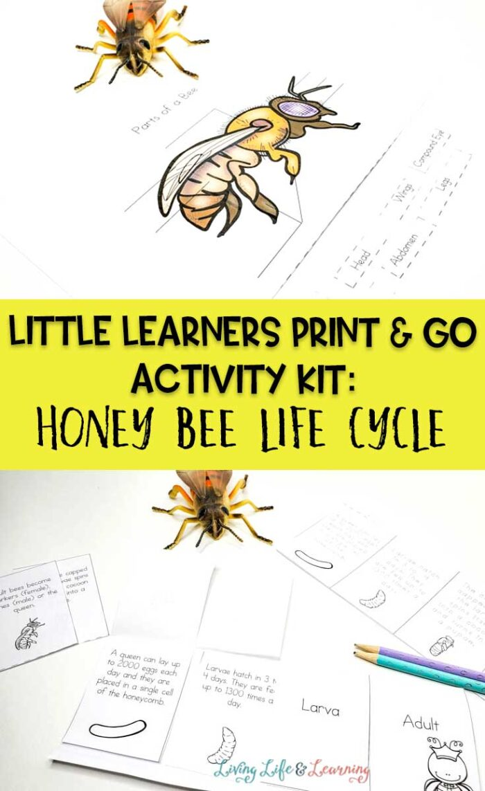 Little Learners print and go activity kit Honey bee life cycle