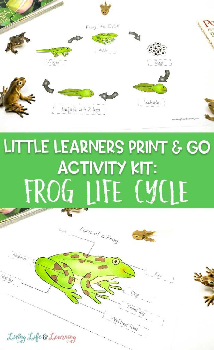 Little Learners Print & Go Activity Kit: Frog Life Cycle