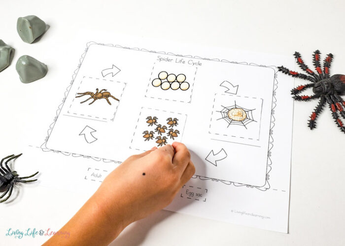 Little Learners Print and Go Activity Kit Spiders