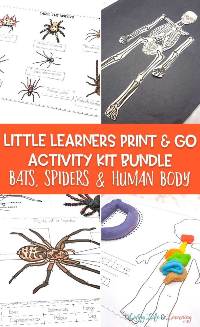Little Learners print and go activity kit bats spiders and human body