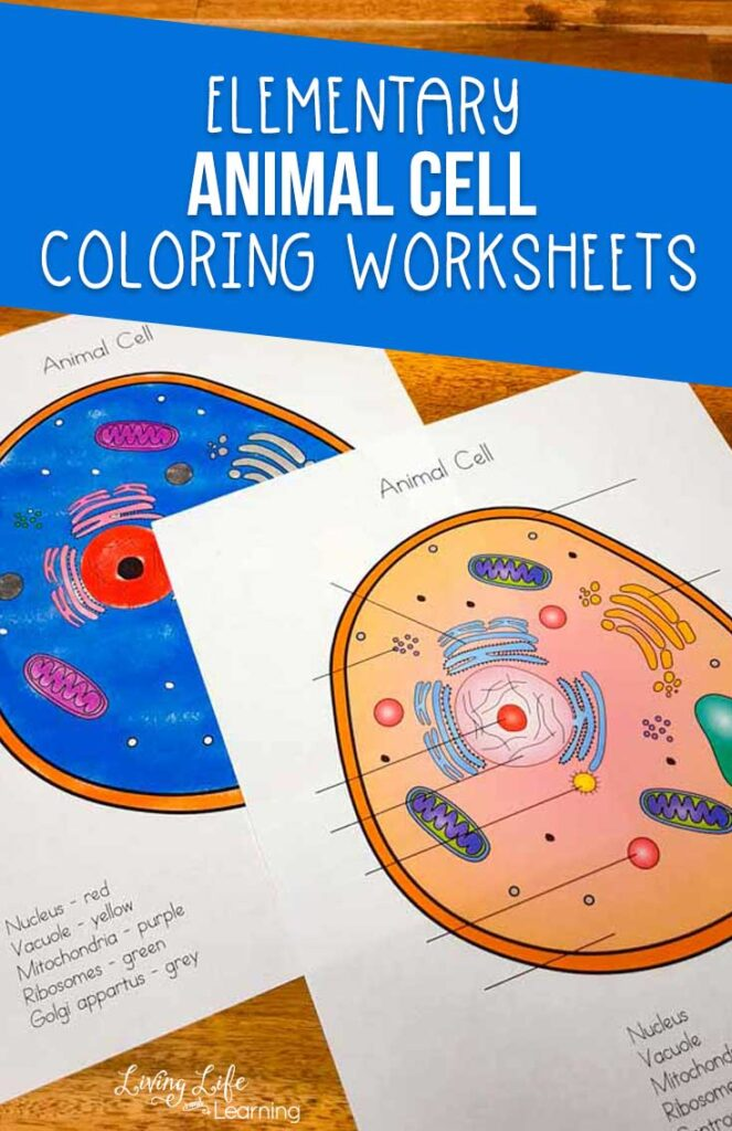 Animal Cell Coloring Worksheet