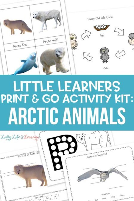 Little Learners print and go activity kit arctic animals
