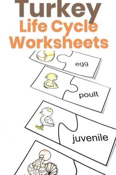 Turkey Life Cycle Worksheets