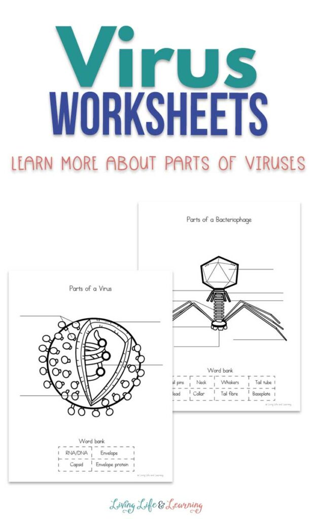 Virus Worksheets