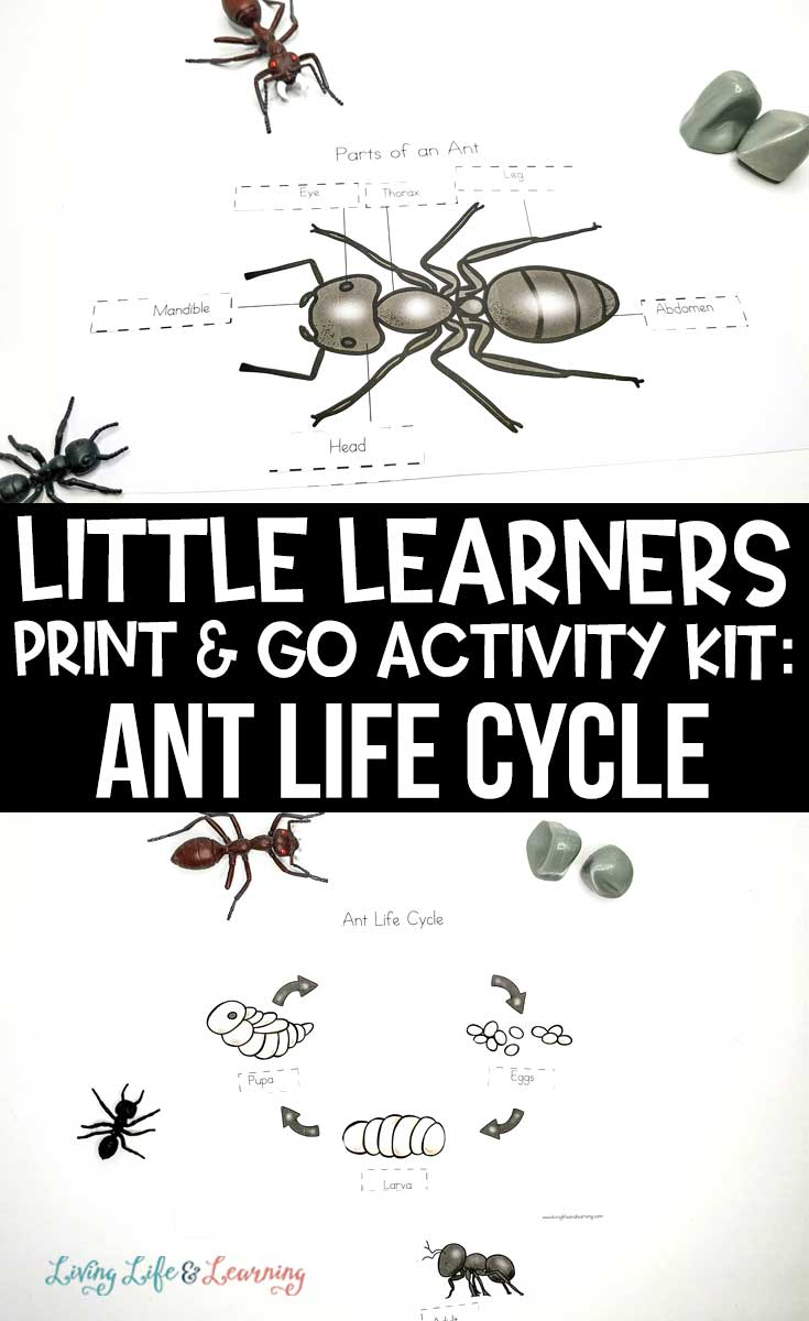 Little Learners print and go activity kit ant life cycle