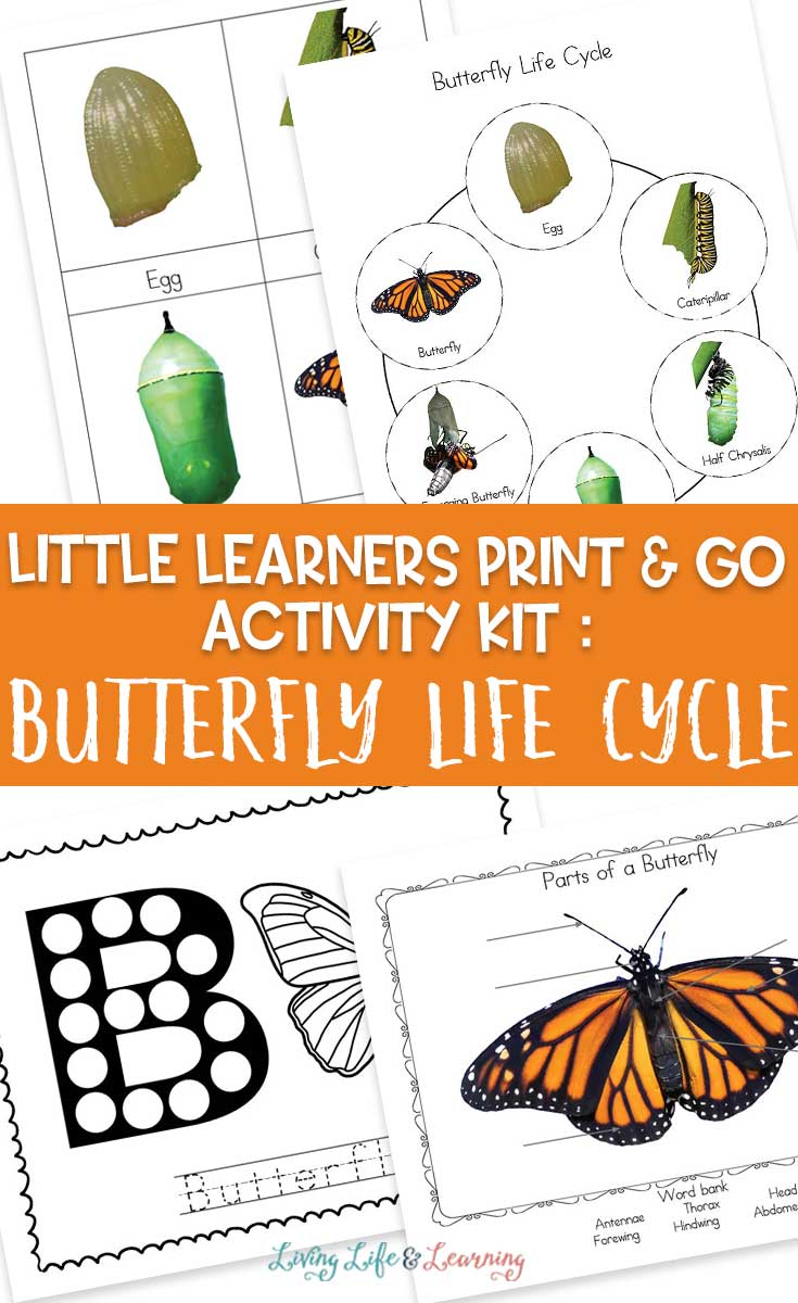 Little Learners print and go activity kit butterfly life cycle